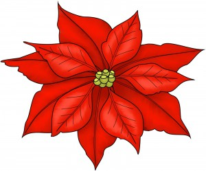 Poinsettia Colour