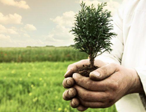 Season of Creation Environmental Justice Series