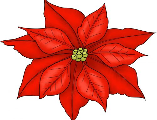 STA Holiday Poinsettia Sale!